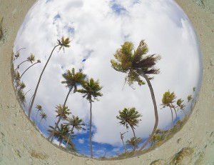 Fish-eye-view-of-coconut-palms,-shot-from-underwater