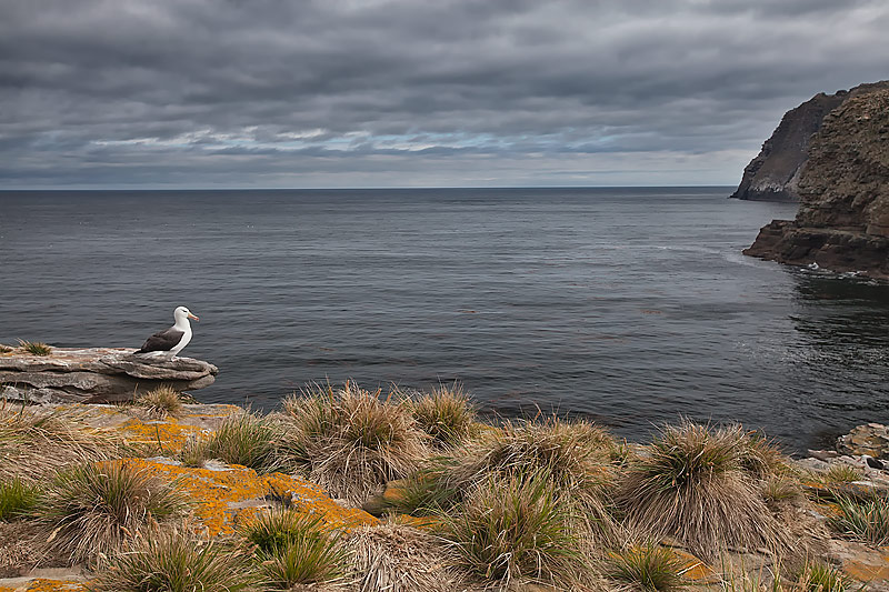 Cliff Edge By The Sea Images
