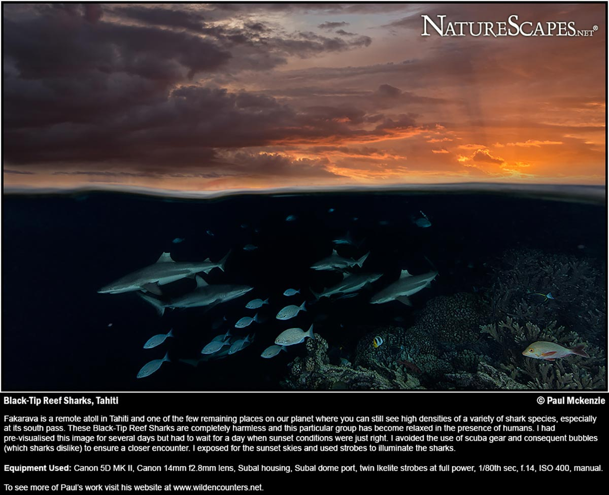 Naturescapes Aug 2014 cover