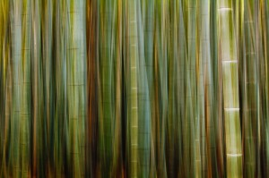 Bamboo grove blur, merged images, Arashiyama, Kyoto, Japan