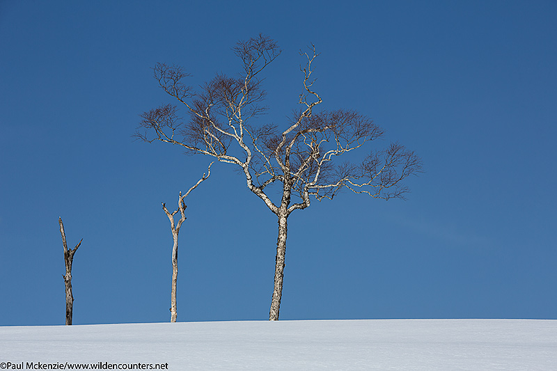 10. Trees on snow covered ridge, Hokkaido, Japan