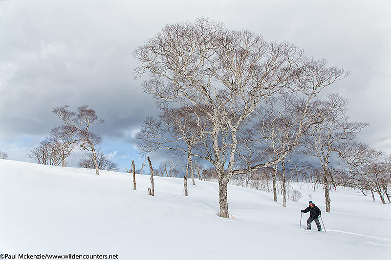 8. Paul Quah on snow shoes amongst trees on snow slope, Hokkaido, Japan