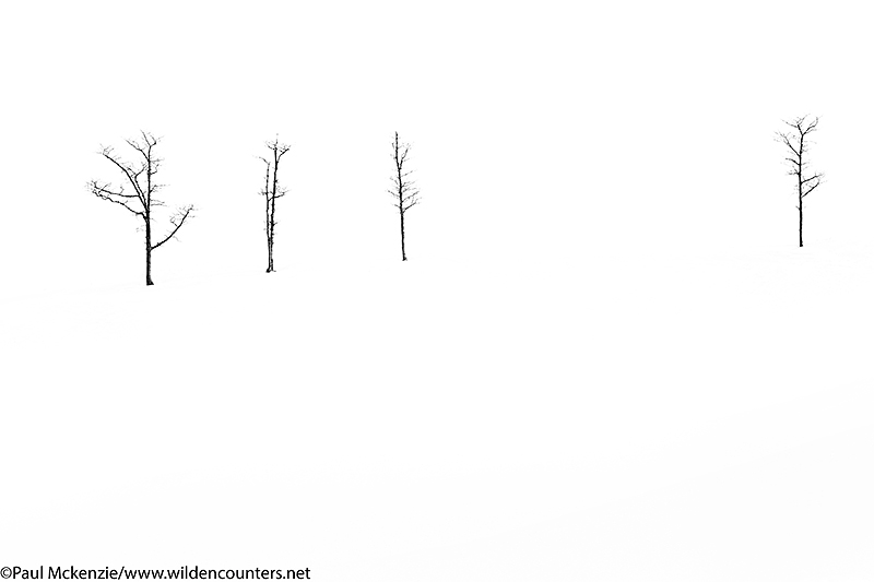 Leafless trees in snow field, Hokkaido, Japan_P3I5146 {J}
