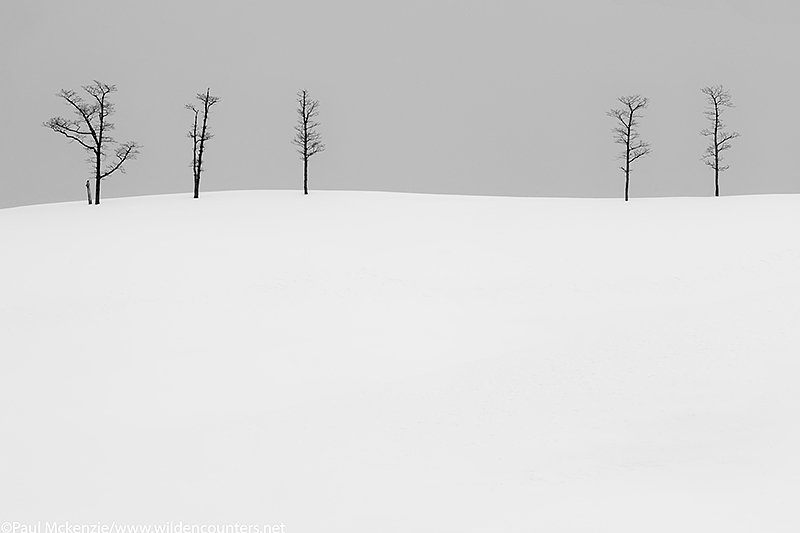 B&W Leafless Elder trees on top of a snow covered hill, Eastern Hokkaido, Japan