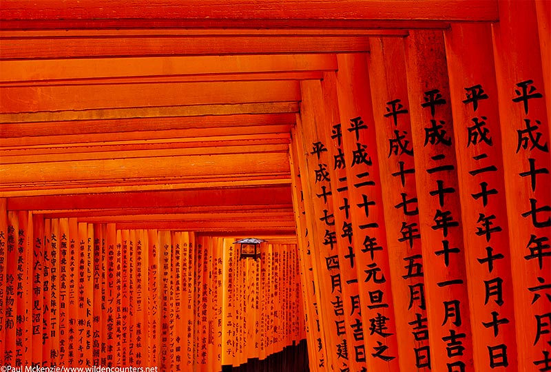 39a.Tightly packed arcades of wooden, vermilion torii (shrine gates), Fushimi Inari Taishi, Kyoto, Japan