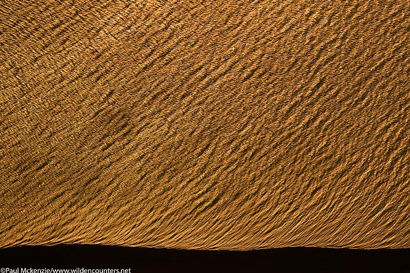 69. Aerial image of lake water patterns at sunset on the shore of Lake Turkana, Kenya _97A1125 {J}