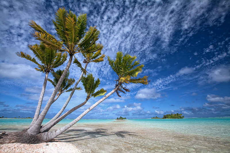 19 Coconut-plams-on-small-atoll-(motu)-in-lagoon,-Fakarava,-Tahiti-Web-Prepared