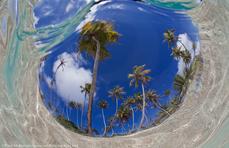 21 Underwater,-fish-eye-view-of-coconut-palms,-Fakarava,-Tahiti-Web-Prepared
