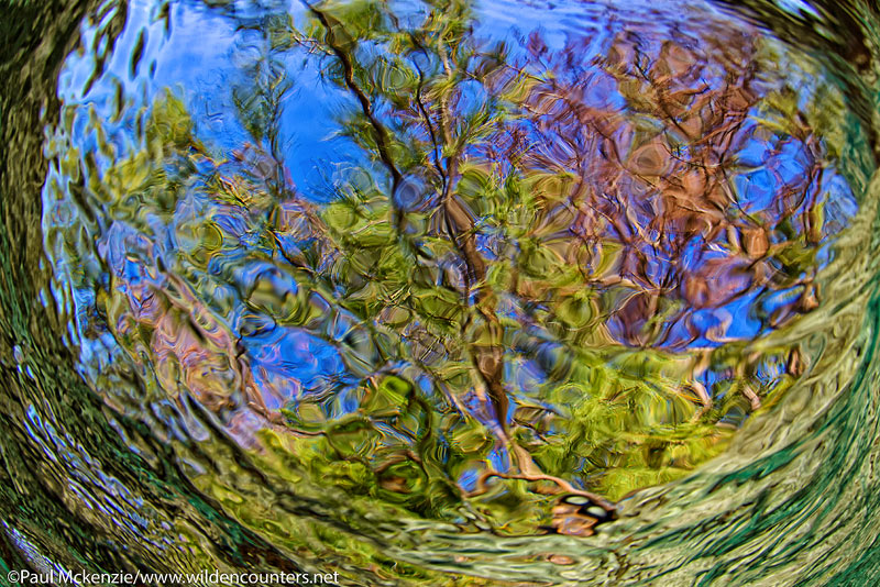 22a Underwater-view-of-overhanging-trees,-Fakarava,-Tahiti-Web-Prepared